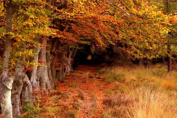Desaparecen 13 millones de hectáreas de bosque cada año