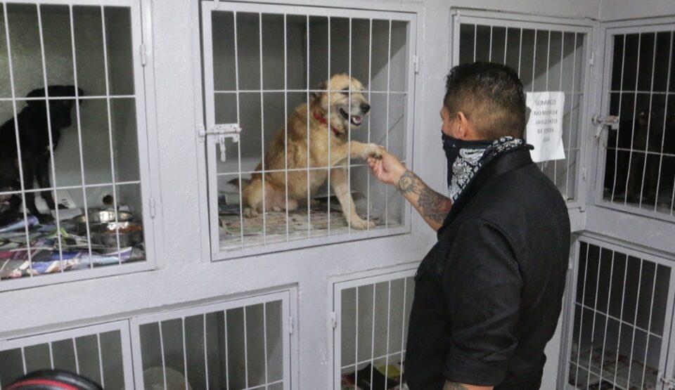 """Forman Escobedo y Grupo Inspector Alianza """"perrona"""" por animales desprotegidos"""